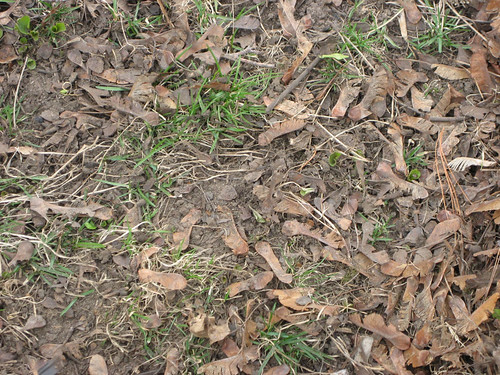 In lieu of grass, weve got this?