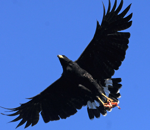 blackhawk4
