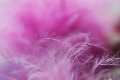 ...fluff is a substance too... (jewelflyt) Tags: pink macro bokeh quote feathers fluffy fluff storypeople hppt prettypinktuesday
