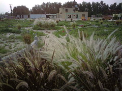 صورة0034 (lateefkuwait) Tags: في تاريخ المزرعة 452009