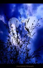 Nice (aroon_kalandy) Tags: blue light sunset moon india beach nature beauty photoshop creativity evening artistic branches awesome greatshot impressions lovely naturelovers calicut beautifulshot anawesomeshot malayalikkoottam sonyh50 vosplusbellesphotos aroonkalandy