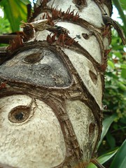 Eye-Tree Trunk