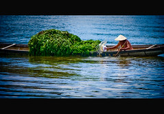 On the Perfume river (Vu Pham in Vietnam) Tags: street travel reflection river landscape landscapes movement asia southeastasia vietnamese candid vietnam dailylife hue vu canoneosdigitalrebelxt perfumeriver indochina  hu  imperialcity vitnam  hu phongcnh dulch   huecity cucsng holidaysvacanzeurlaub ngph snghng conngi chu c thurathienhue kinh raininvietnam onglaido thnhhu commentwithimageswillbedeletedsosorryforthis