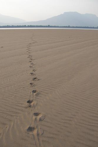144.沙洲上的足跡