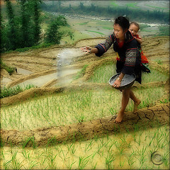 Let it grow (NaPix -- (Time out)) Tags: life family portrait food baby black love nature work canon landscape hope dance asia rice paddy farming working mother bamboo vietnam explore story fields info motherhood motherandchild journalism planting sapa hmong paddies tms 500x500 lifestory tellmeastory workingwoman explored ricefarming colorphotoaward laochaivillage muonghoavalley napix canoneosdigitalrebelxsi winner500 artofimages indigoblueclothing worldworx bestportraitsaoi weareplantingthericenow greenitsawayoflifeforus elitegalleryaoi