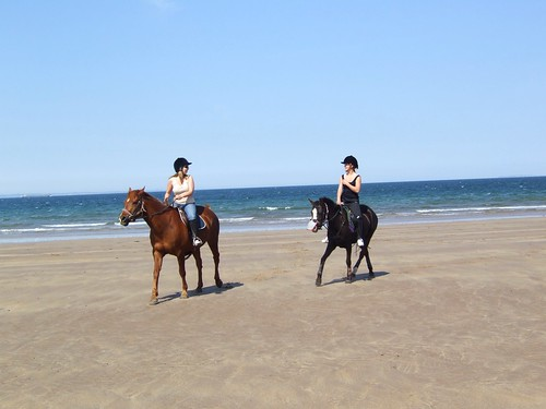 sea horses 010