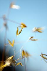Verano por nachop, en Flickr