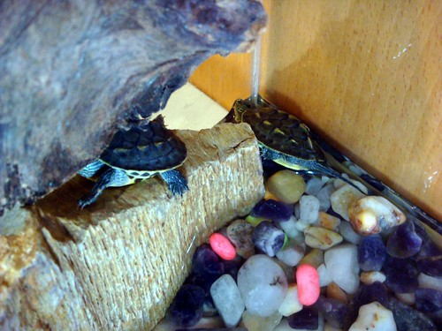 長尾龜的小窩
