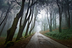 Princesses, Peas and Enchanted Trees (Lus C) Tags: road wood morning mist tree portugal rain fog forest landscape dawn path sintra biosphere peninha deforestation kyotoprotocol d80 pprowinner sustainableforestmanagement carbonoffsetprogramme
