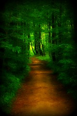 The Forest Path (astanse(Angela Stansell)) Tags: county favorite fern green beautiful leaves june forest canon rebel one photos path south upstate falls used upper carolina kit angela 2008 thus far leading section pathway oconee lense lined ofmy ilovethispic xti bej goldstaraward ubej gorgeousgreenthursday dragondaggerphoto astanse tobrasstown pfemerald primevalforestgroups