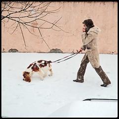 AUNQUE NIEVE, HAY QUE PASEAR AL PERRO (ABUELA PINOCHO ) Tags: madrid españa mujer spain nieve nevada perro frio paseando desdemiventana picado ltytr2 ltytr1 formatocuadrado a3b