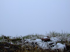 Nebbia in valpadana-A fog project01 (Felson.) Tags: mist snow cold grass fog frost hoarfrost ground brina erba neve land campo nothing nebbia brianza freddo boh terreno scighera nulla mrrem songthegreatbeyondrem