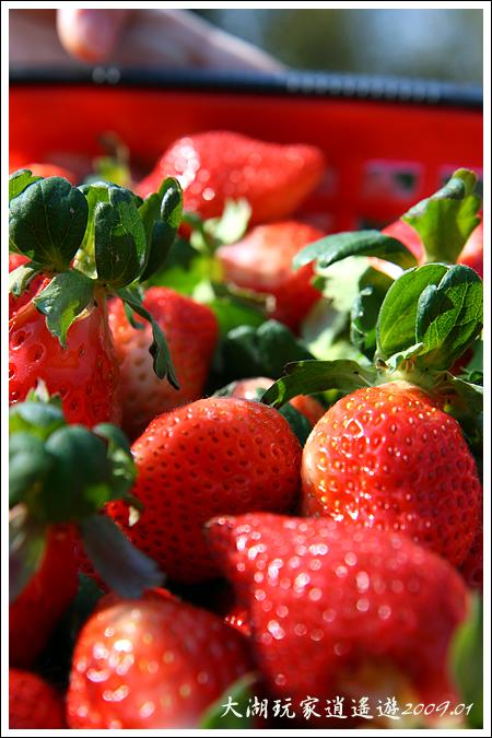090117_00_採草莓