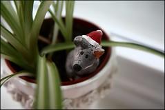 Peek-A-Bokeh! (@richlewis) Tags: england plant canon toy mouse eos northampton dof bokeh hiding canonefs1755mmf28isusm 450d