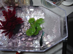 NeptLgNest (gloamingorchid) Tags: neptune bubblenest
