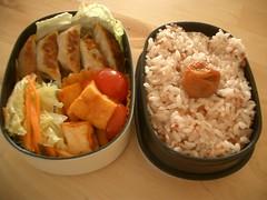 on a sunny day (skamegu) Tags: food rice tofu cabbage bento japanesefood gyoza potstickers       atsuage