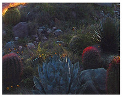 (phil_sidenstricker) Tags: statepark nature water cacti landscape botanical information mosca textured boycethompsonarboretum patios desertplants donotcopy informationsigns amazingamateur proudshopper awardtree superiorazusa digitalartfx apretentioussystemofheteroducks mailexchangeart