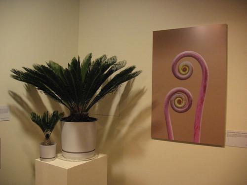 Ferns, 370 million years ago