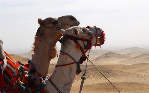 LND_2534 Giza Pyramids
