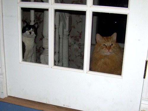 Stalker Kitties