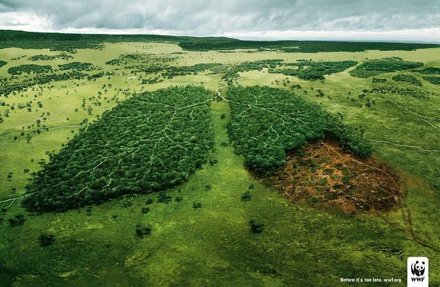WWF - Lungs