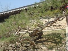 DSC01125 (Turansa Tours) Tags: yongin aldea folclorica
