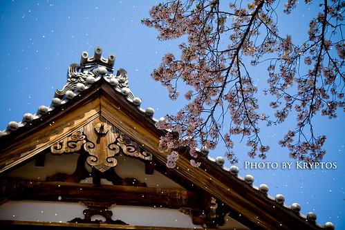 The Last of Sakura