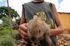 Capturado (Toni Barros) Tags: boy rabbit bunny easter pscoa coelho