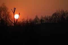 Me and my love (iM@n) Tags: sunset red sun tree branch nederland thenetherlands eindhoven p iranian ایران brabant ایرانی هلند mywinners ماو