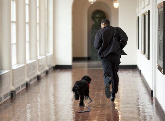 The-Obama-familys-dog-Bo--002