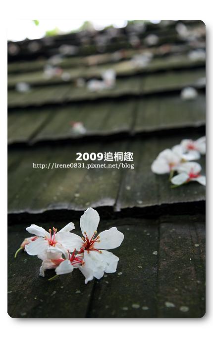 090427_11_油桐花坊