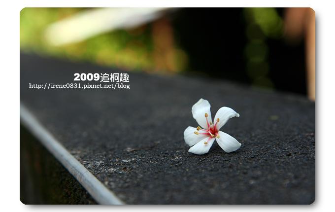 090504_13_土城追桐