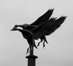 Mallards In Flight Statue, Ross-on-Wye.