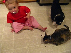 Clara Ann giving the kittens a treat
