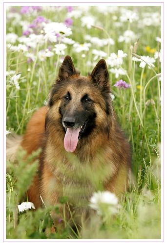 Ringo steh in der Blumenwiese