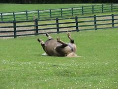 IMG_2788 (davnagy) Tags: horse nature animals canon is kerry powershot killarney termszet s3 foal canonpowershots3is lovak
