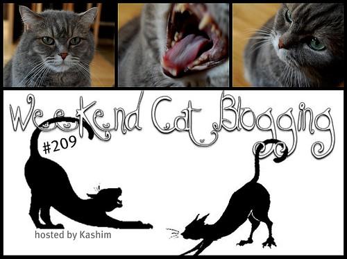 Weekend Cat Blogging #209