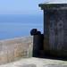 20070518 Gibraltar: monkeys in shade