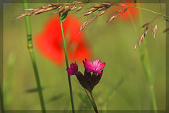 biodiversity 01