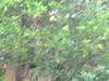 20052009349 (prince812000) Tags: dharwar