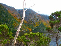 IMG_5927 (billdog) Tags: australia tasmania tassie downunder