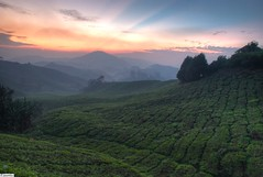 sunrise @ sg palas (horizontal hdr) (jasonlouphotography) Tags: nature sunrise cameronhighlands sgpalas