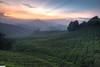 sunrise @ sg palas (horizontal hdr) (jasonlouphotography) Tags: nature sunrise cameronhighlands sgpalas