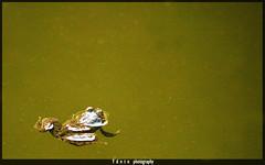 MySpace.com (ydntn_ydntn) Tags: city bw india photography j republic mt hill bangalore attack picture olympus myspace frog hills mount business toad metropolis nandi taking mound karnataka job mysore province biological bharat bws warfare nandihills olympuse500 anuran ydntn bws21june2009nandihills ydntnphotography