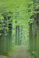 The Path (ikbendewereld) Tags: forest evening bomen nederland thenetherlands boom avond bos beech veluwe 2010 gelderland ermelo landgoed leuvenum beukenbos