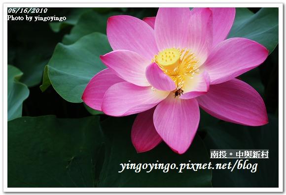 中興新村99年蓮花I2175