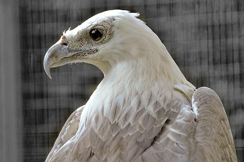 eagle600
