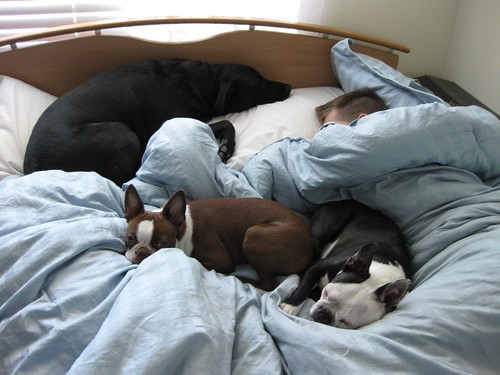 Michael and his bed buddies