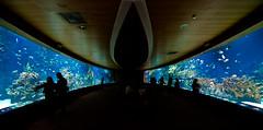 Prison Nemo (Topyti) Tags: valencia geotagged acquario oceanario geo:lat=39453327 geo:lon=0348333