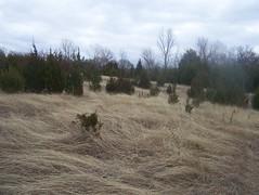 Sister Grove Grass Sea, Winter 2009